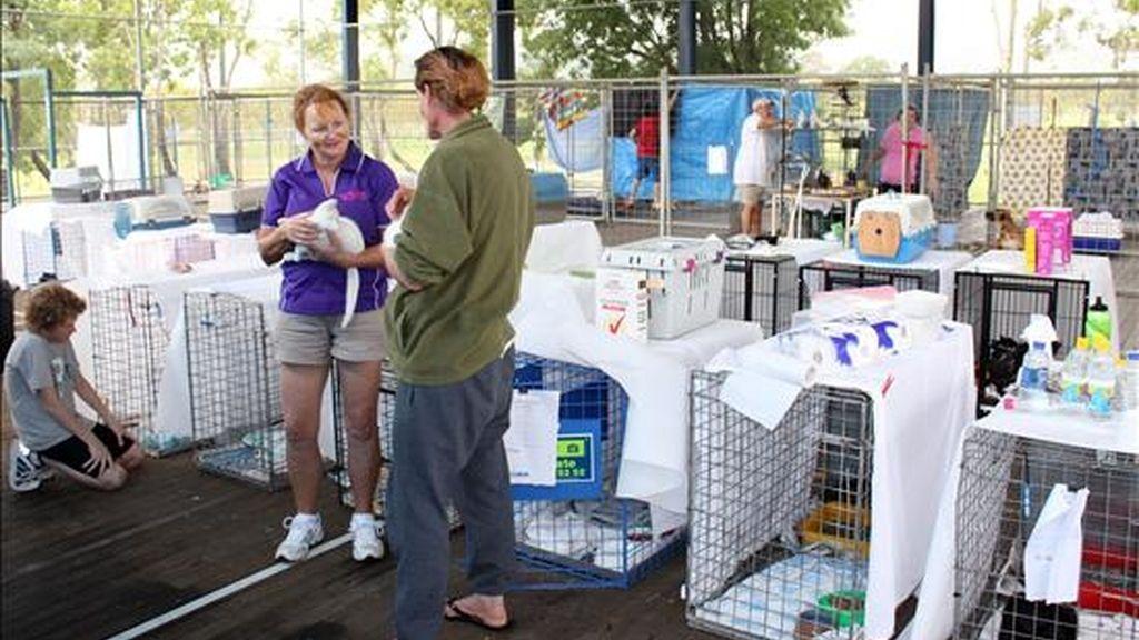 Miembros de la Real Sociedad para la Prevención de la Crueldad contra los Animales organizan un refugio para los animales hoy, 6 de enero de 2010, en la cancha de baloncesto del Centro de Evacuación establecido en Centro Deportivo Comunal de la Universidad de Queensland en Rockhampton (Australia), donde cientos de hogares permanecen bajo el agua. EFE