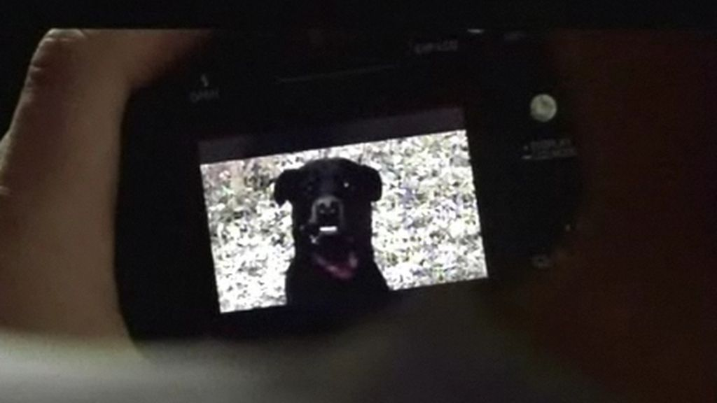 Diarios del miedo: Perro negro