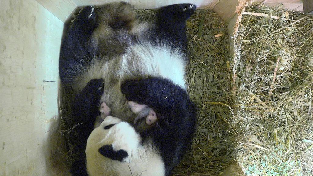 Yang Yang con sus dos pequeños