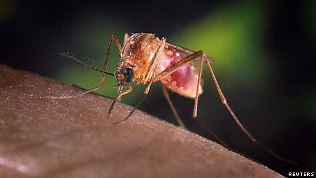 Virus Nilo