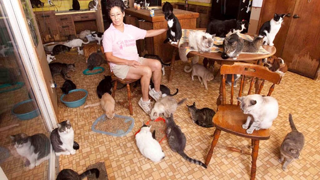 'The Lady with 700 Cats'