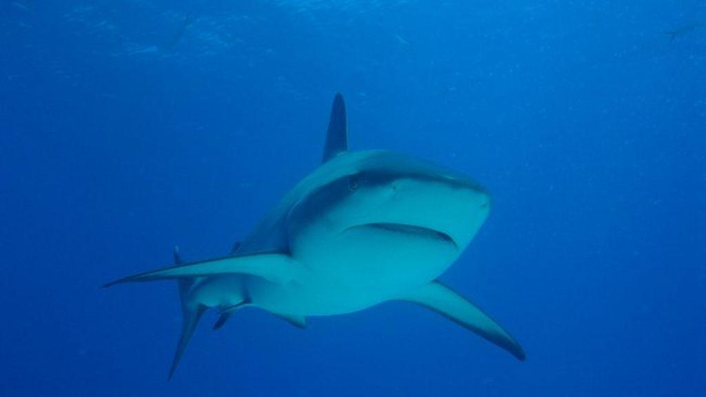 Nadar con tiburones tigre