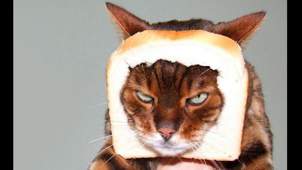 La mirada más aterradora de los gatos