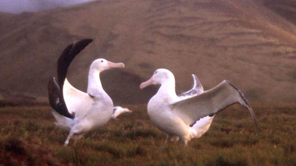 Nómadas del Viento (2001)