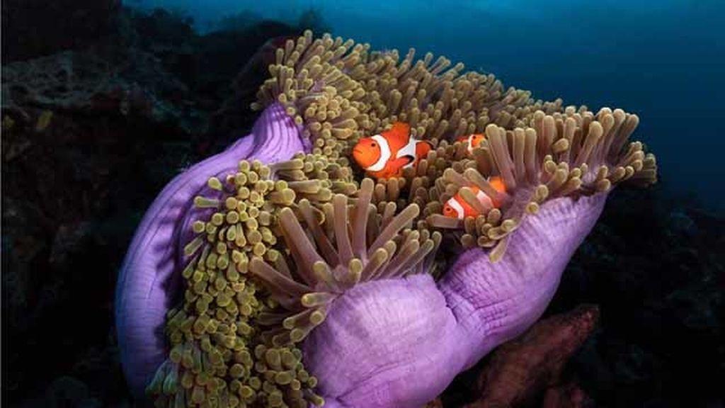 Un fotógrafo encuentra a Nemo