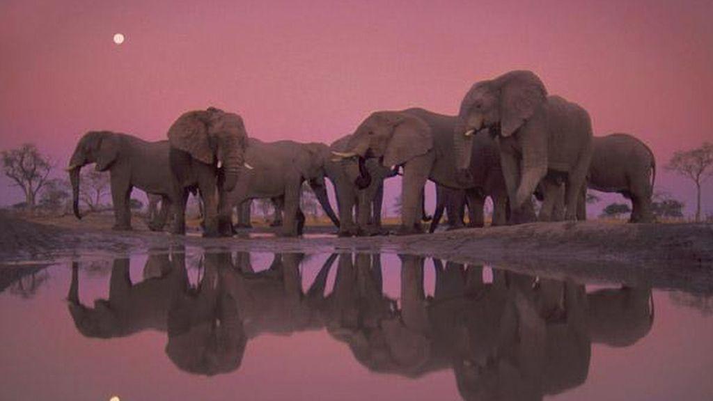 Crepúsculo con elefantes africanos