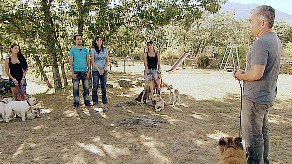 El líder de la manada: Comienza la cruzada contra el abandono de perros en España