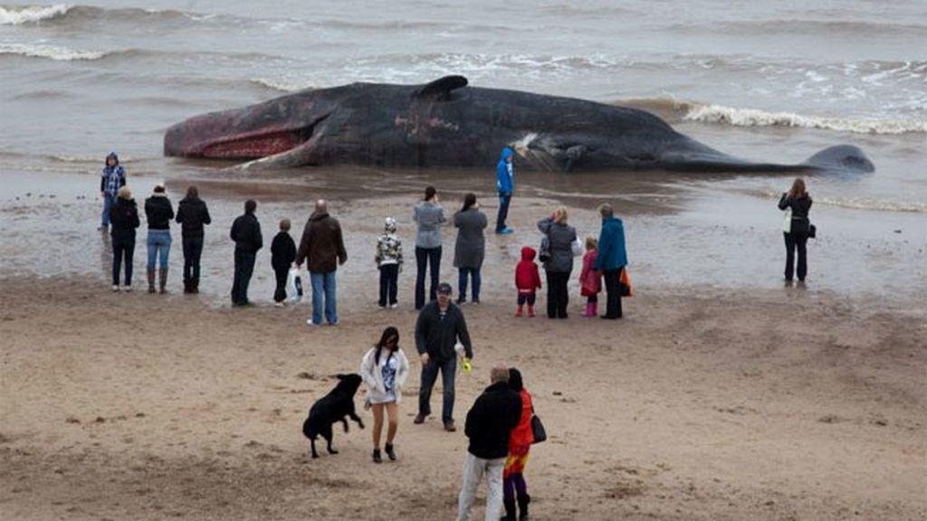 Aparece una ballena muerta en una playa de Reino Unido