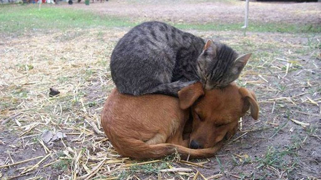 ¡Aquí te pillo, aquí me duermo!