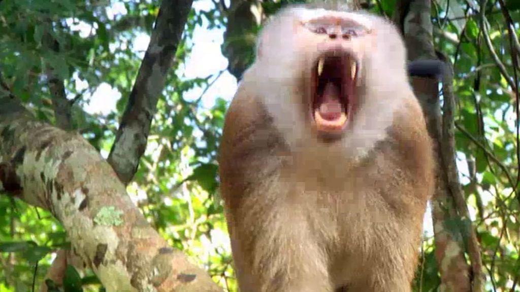 Frank nos enseña cómo sobrevivir en la selva sin nada