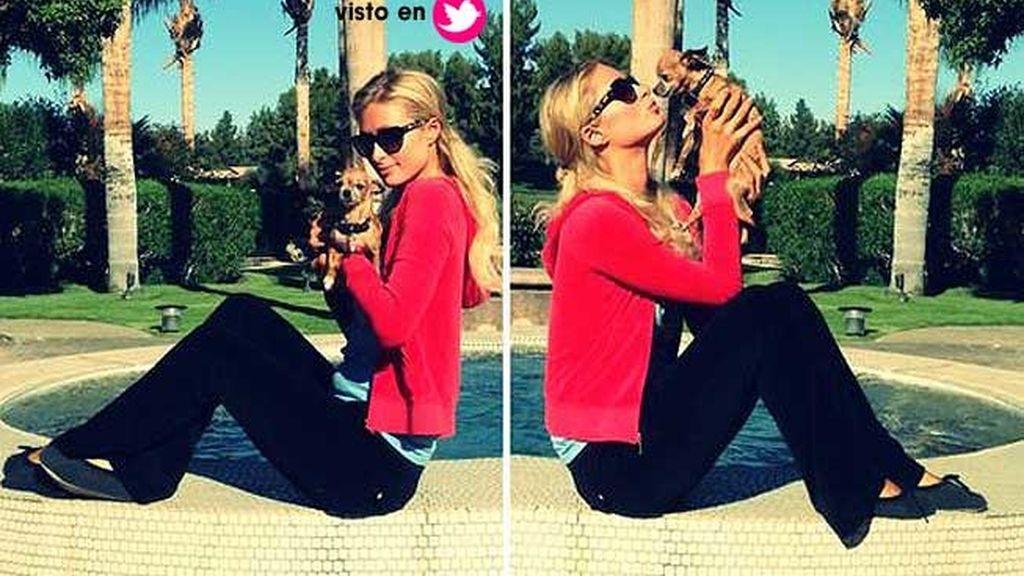 Paris Hilton y uno de sus 13 chihuahuas
