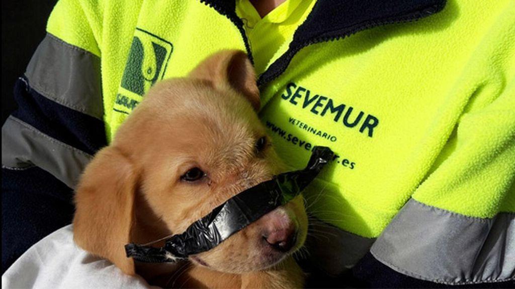 Perro abandonado en un cubo de basura en Madrid