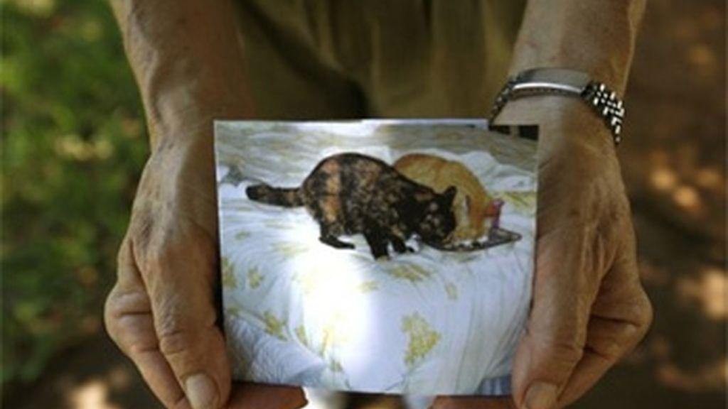 Una vecina de Palmetto Bay, en Miami, sostiene la imagen de sus gatos, uno de los cuales ha sido asesinado. Foto: AP.
