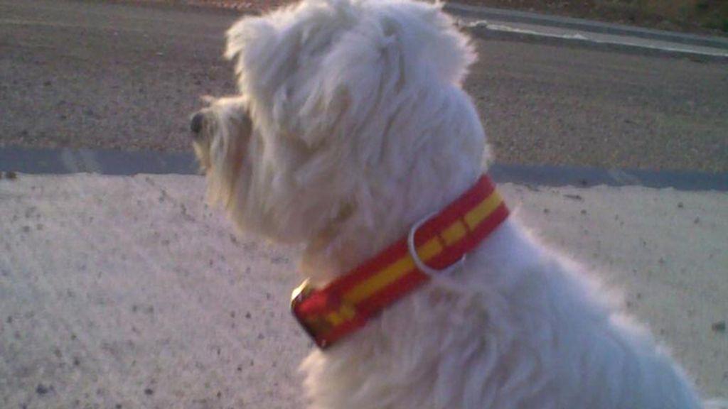 Si tu perro ladra con los goles de La Roja, que sea con una correa con nuestra bandera