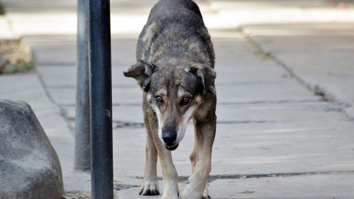 Un perro boliviano aún llora a su amo en el lugar en el que murió su amo hace cinco años