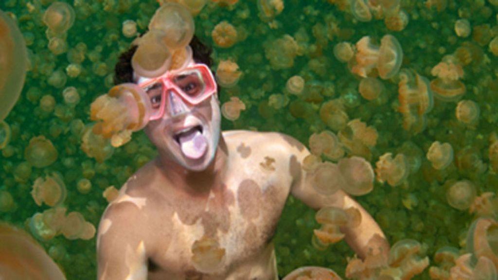 Nadando entre medusas