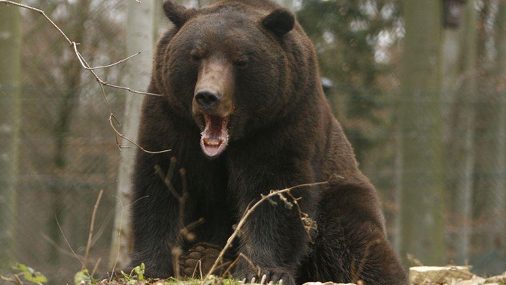 Un profesor, atacado por un oso delante de sus alumnos