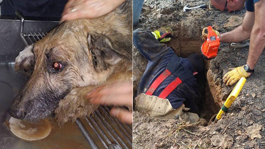Un perro sobrevive a 72 horas de agonía tras quedarse enterrarado en una zanja