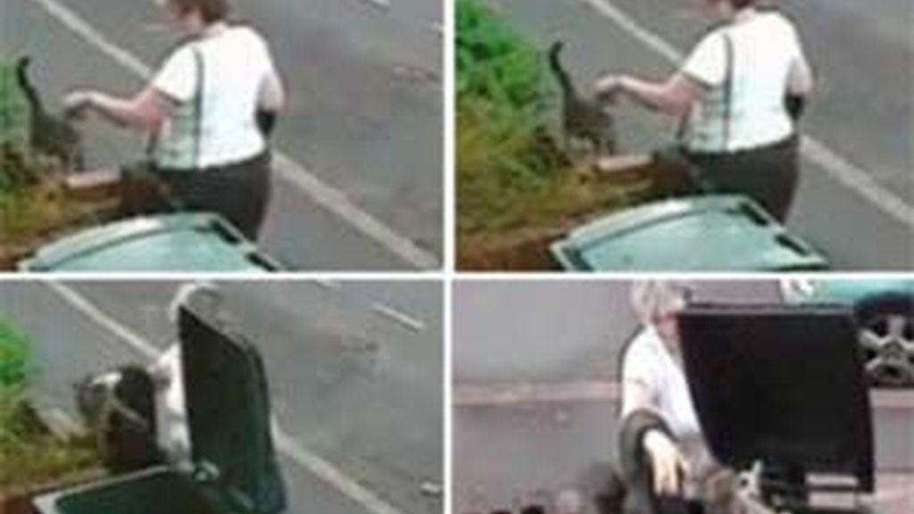 En el vídeo se ve a la mujer tirando al gato en el contenedor. Vídeo: Informativos Telecinco