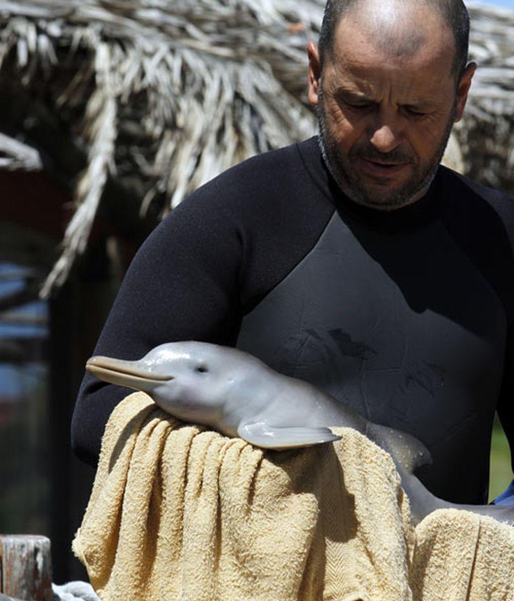 Rescatan a un bebé delfín en Uruguay