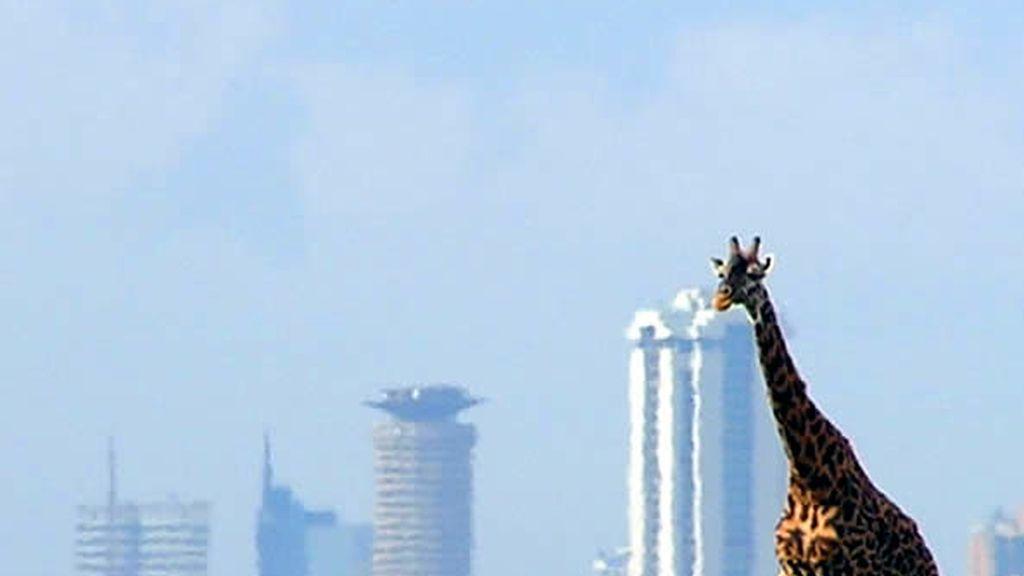 Nairobi: naturaleza y ciudad unidas