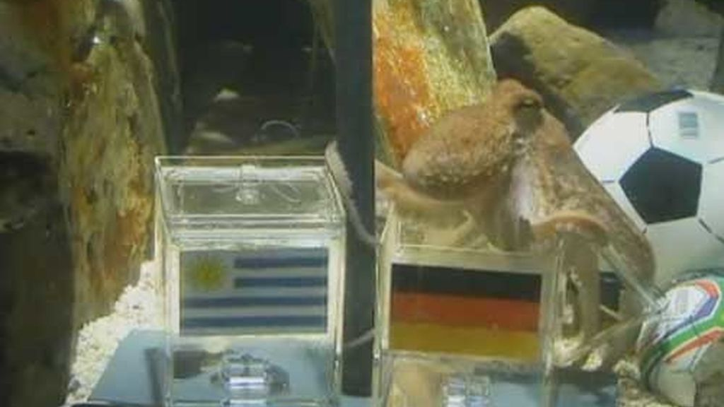paul descansa en la urna de alemania