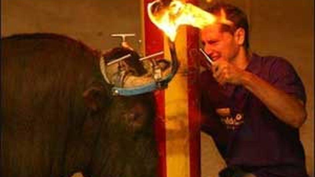 """Los """"toros de fuego"""" son atados por la cabeza a un palo y también les colocan unos artilugios metálicos en los cuernos con dos bolas impregnadas de material inflamable, a las que prenden fuego. Foto: Archivo."""
