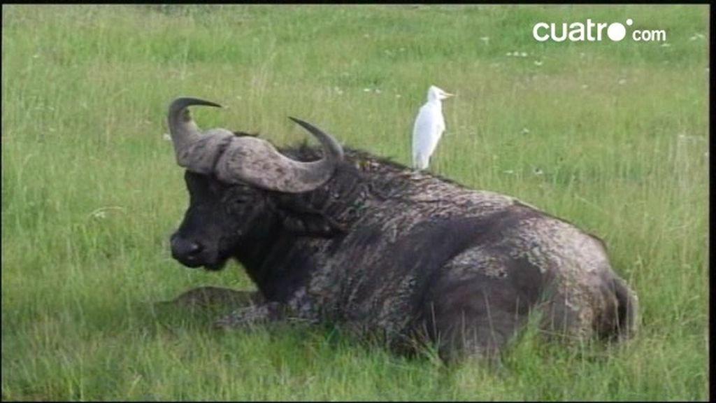 Kenia: Un paraíso animal