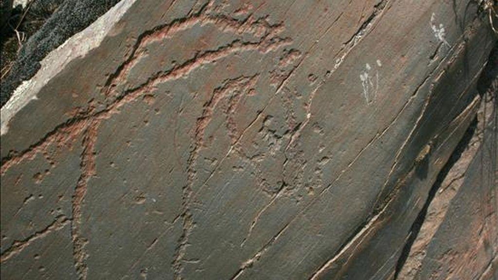 Figura de un caballo grabada en piedra de pizarra, una de las piezas conservadas en el yacimiento arqueológico de Siega Verde, en la comarca de Ciudad Rodrigo. EFE/Archivo