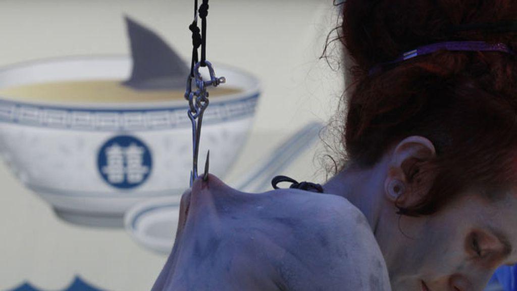 Colgada por su piel en defensa de los tiburones