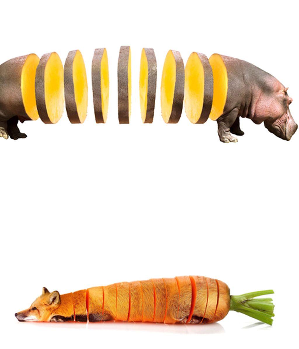 Animales convertidos en frutas y verduras
