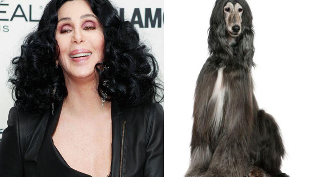 La cantante Cherilyn Sarkisian 'Cher' y el perro que ansía su 'look'
