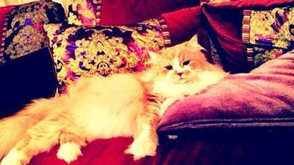 Los gatos más ricos del planeta