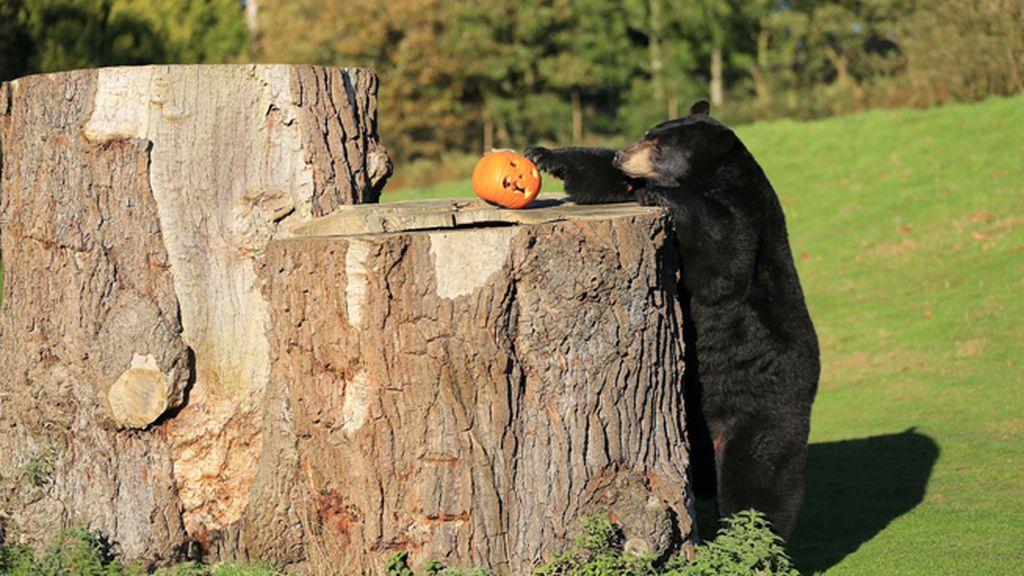 Los animales también disfrutan de Halloween