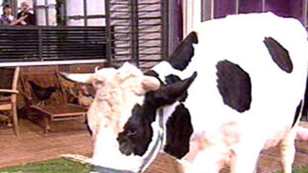 La vaca es la protagonista de este capítulo