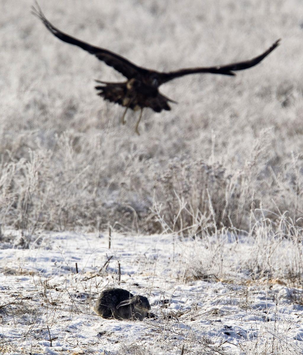 Concurso anual de caza en Kazajistán