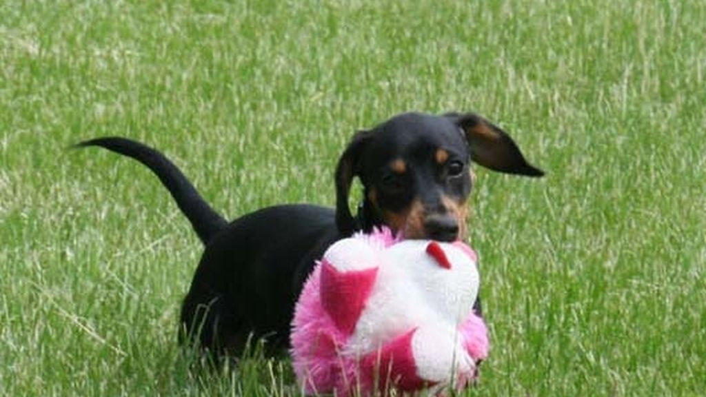 ¡Mi mascota 'pink'!