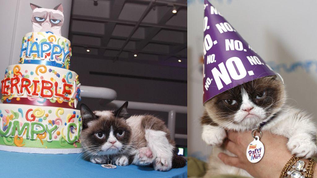 Grumpy, la gata del millón de dólares, celebra su cumpleaños