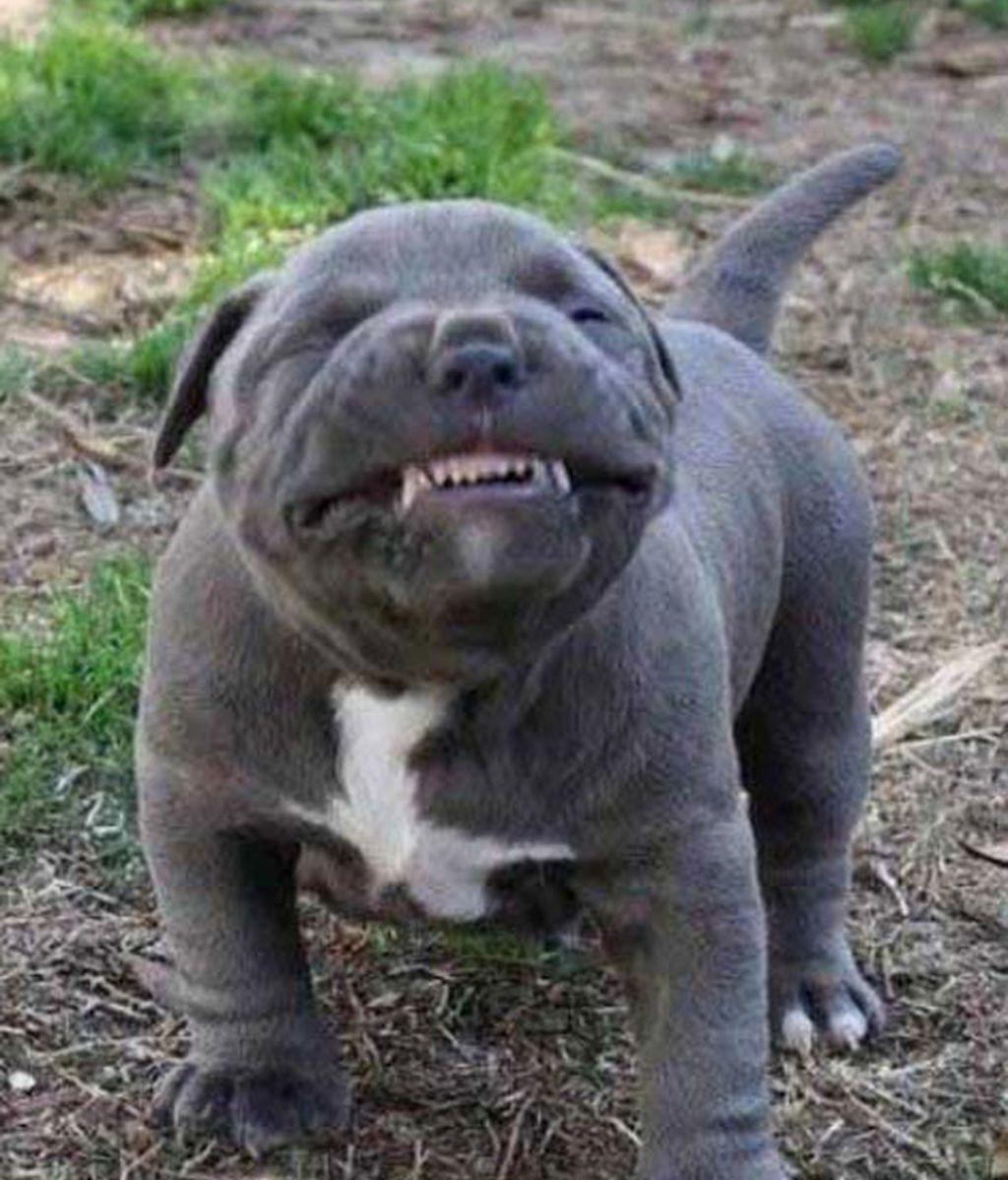 ¿Quién dice que los animales no sonríen?