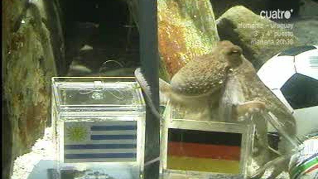 El pulpo Paul dice que Alemania ganará a Uruguay