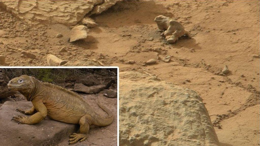 ¿Una iguana en Marte?
