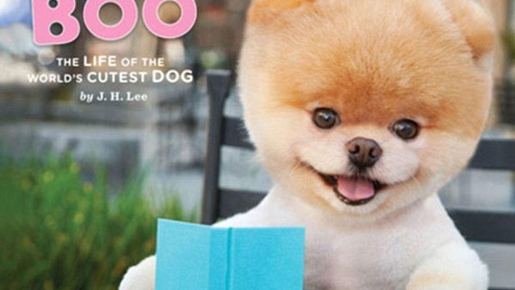 Boo, el perro don dos millones de fans en Facebook