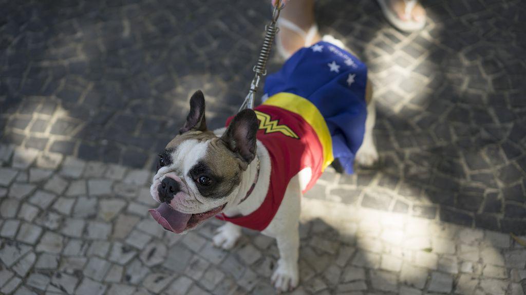 Los perros también son protagonistas en el Carnaval de Río