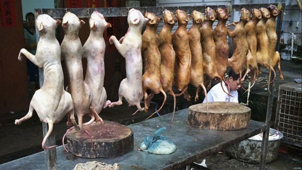 perros, carne de perro, China, hábitos de alimentación, banquete de perros, solsticio de verano