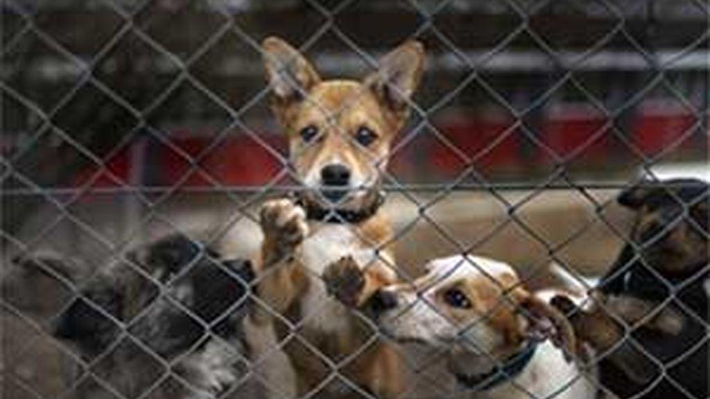 Perros importados ilegalmente desde Eslovenia. Foto:AP archivo