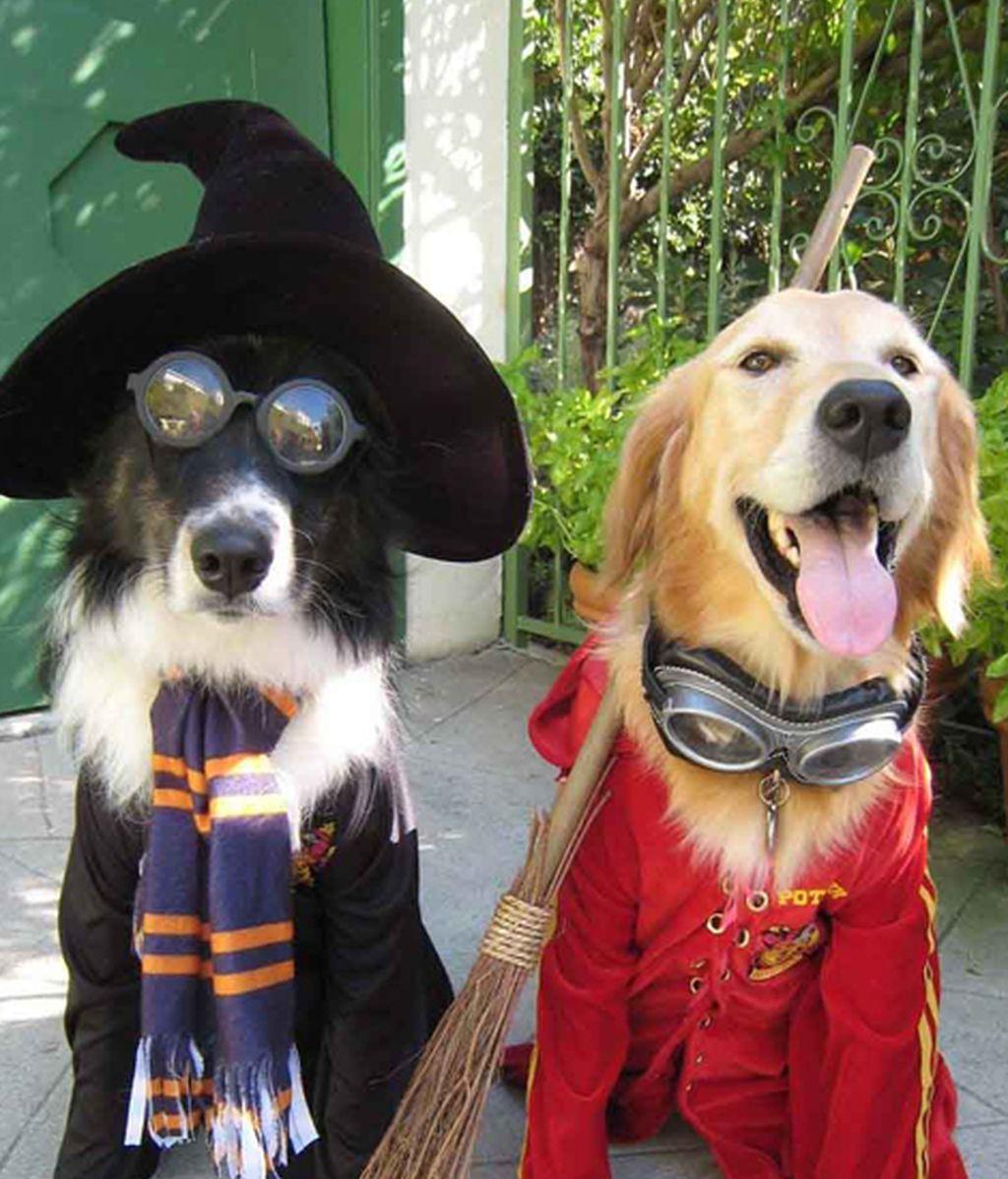 Originales disfraces para las mascotas
