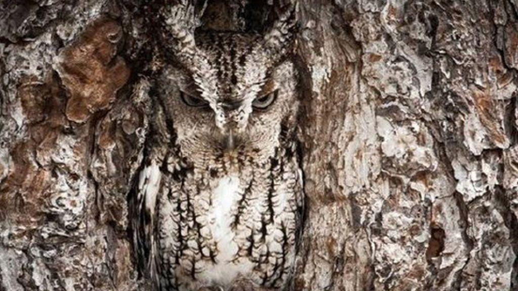 Animales que se esconden