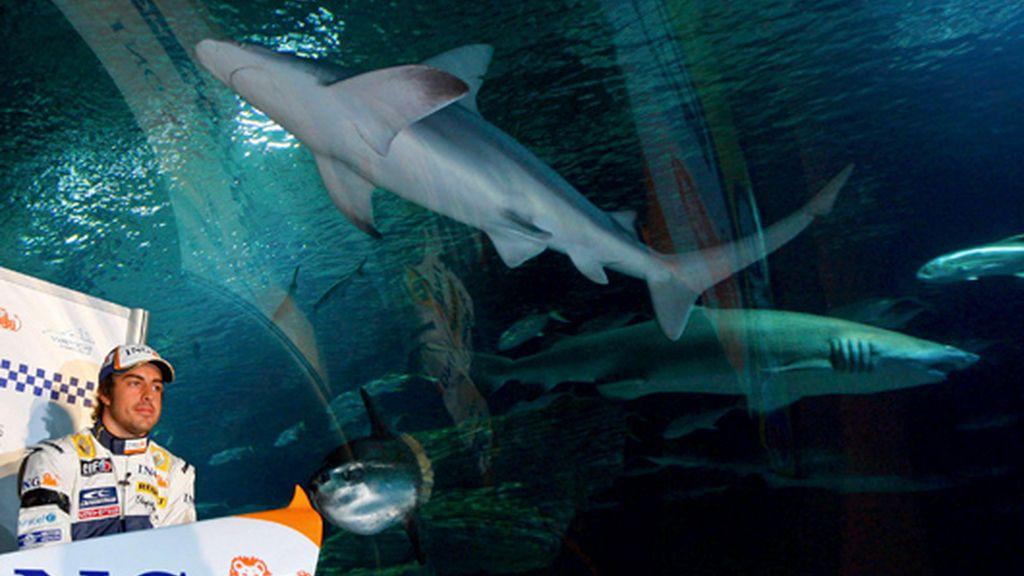 Tiburón, tiburón