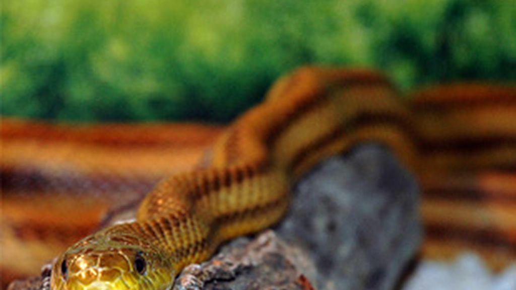 ¿Miedo a las serpientes?