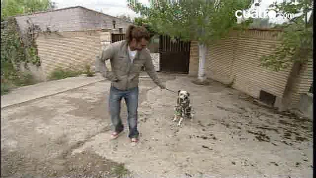 """Capponi: """"El arnés es contraproducente para pasear a los perros"""""""